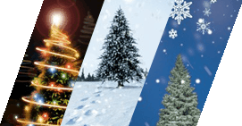 Christmas Tree Greetings Cards